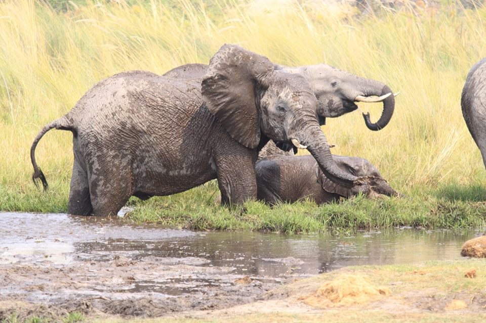 Elephants in the Moremi Game Reserve enjoying the water - Photo by J.Gonzalez